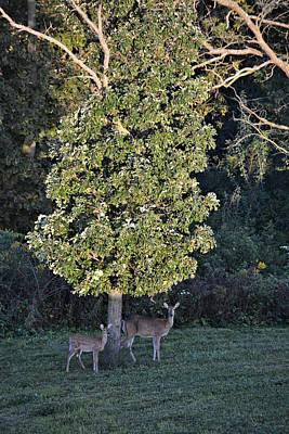 Photograph - The Sunlit Oak by Bonfire Photography