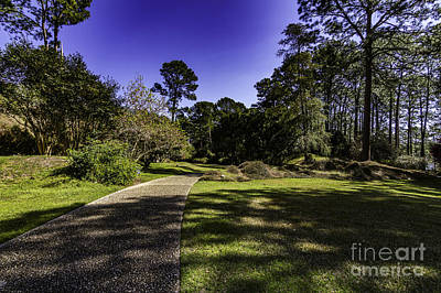 Photograph - The Sunny Path by Ken Frischkorn