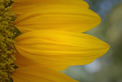 Photograph - The Sunny Side by Richard Andrews