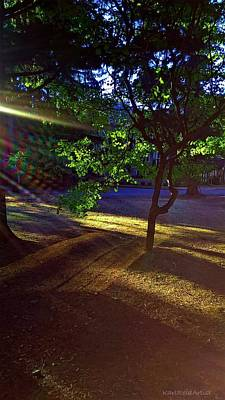 The Sunset Grove  Art Print