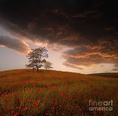 Photograph - The Sunset Of The Poppies - 2 by Stoyanka Ivanova