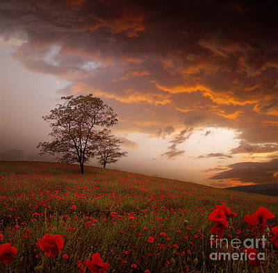 Photograph - The Sunset Of The Poppies by Stoyanka Ivanova