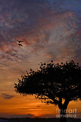 Photograph - The Sunset Tree by Kathy Baccari