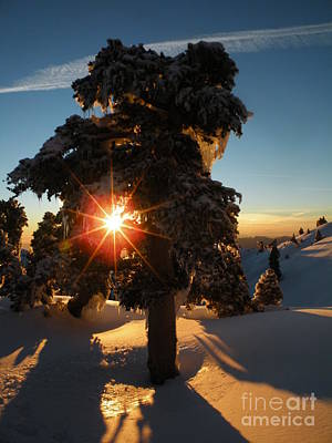 Mount Baldy Photograph - The Sunset Tree  by CM Thibault