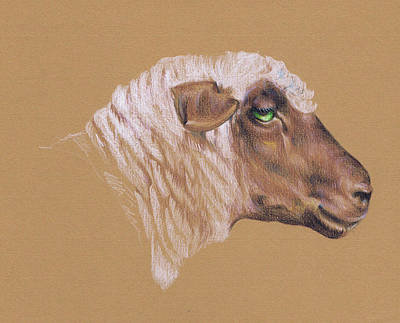 Mountain Goat Drawing - The Surly Sheep by Richard Mountford
