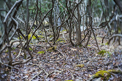 Photograph - The Surreal Forest. Rhododendrons At Early Spring. by Alex Potemkin