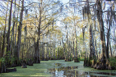 Photograph - The Swamp by Alexis Lee Scott
