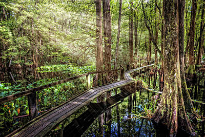 Photograph - The Swamp Trail by Debra and Dave Vanderlaan