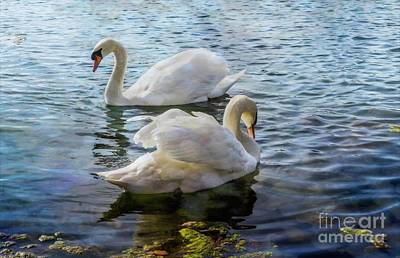 Photograph - The Swans by Cathy Donohoue