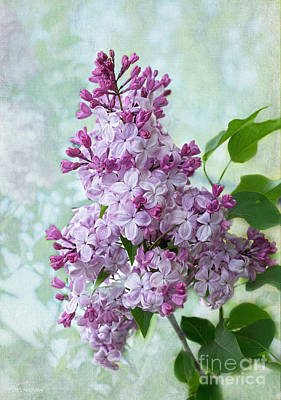 Photograph - The Sweetness Of Lilac by Barbara McMahon