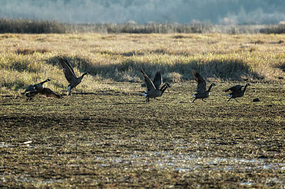 Photograph - The Takeoff, No. 1 by Belinda Greb