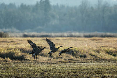 Photograph - The Takeoff, No. 2 by Belinda Greb