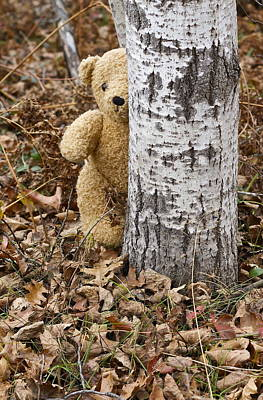 Photograph - The Teddy Bear In The Woods by Danielle Allard