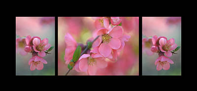 The Tender Spring Blooms. Triptych On Black Print by Jenny Rainbow