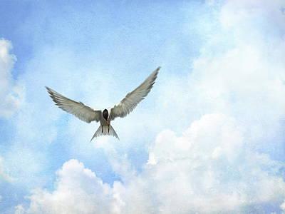 Wild Weather - The Tern - Elegance in Flight by Andrea Kollo