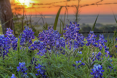 Photograph - The Texas Bluebonnet Sunrise by JC Findley