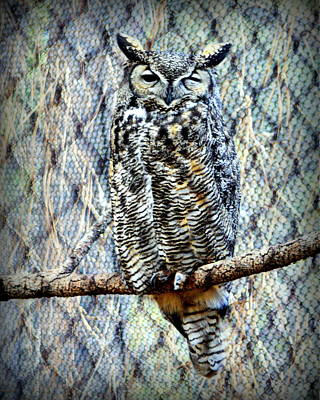 Photograph - The Textured Owl by AJ Schibig