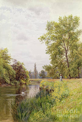 Swans... Painting - The Thames At Purley by William Bradley