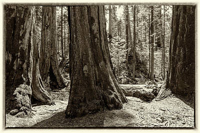Photograph - The Thick And Thin Of It by Belinda Greb