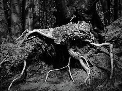 Tree Root Photograph - The Thing by Wim Lanclus