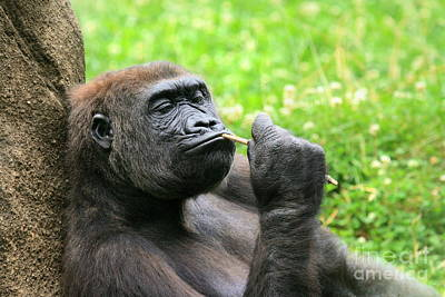 Photograph - The Thinker by Angela Rath