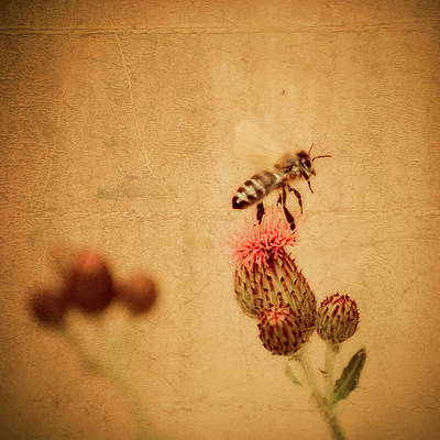 Photograph - The Thistle And The Bee by Mandy Tabatt