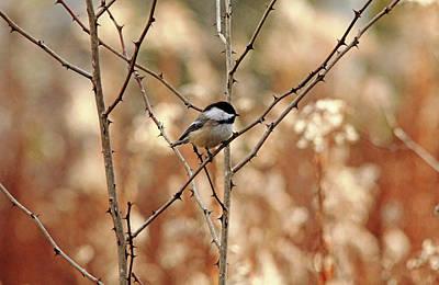 Photograph - The Thorn Bird by Debbie Oppermann