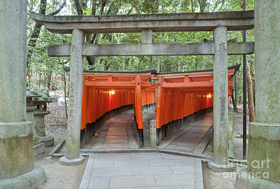 Torii Photograph - The Thousand Gates by Rob Tilley