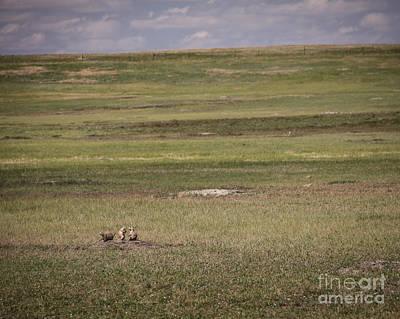 Photograph - The Three Amigos by Sandy Adams
