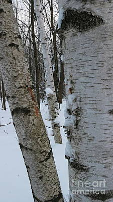 Photograph - The Three Birches by Erick Schmidt