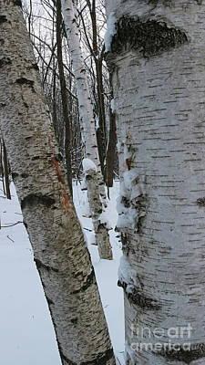 Photograph - The Three Birches by Erick Schmidt