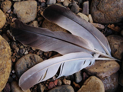 Photograph - The Three Feathers by Teri Schuster