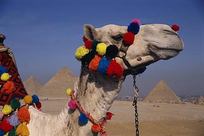 The Three Great Pyramids Of Giza Art Print by Stephen St. John