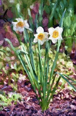 Photograph - The Three Sisters - Daffodils by Kerri Farley