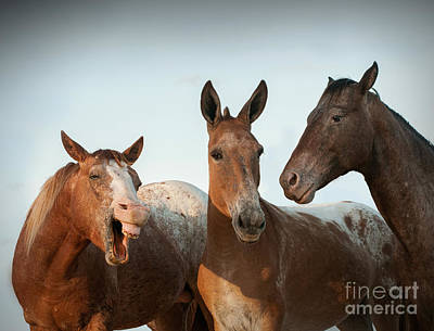 Three Stooges Photograph - The Three Stooges by Diana Allison