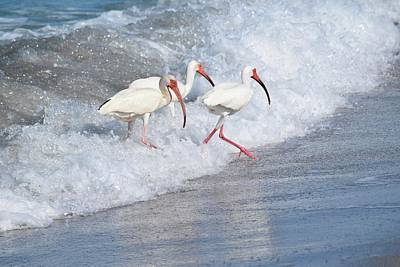 The Tide Of The Ibises Art Print