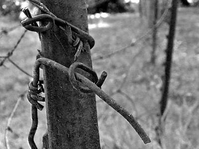 Photograph - The Ties That Bind by Everett Bowers
