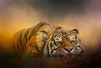 Photograph - The Tiger Awakens by Jai Johnson