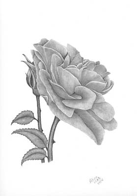 Drawing - The Timeless Beauty Of Roses by Patricia Hiltz