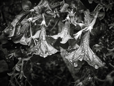 Photograph - The Tolling Bells Of Sorrow by Will Jacoby Artwork