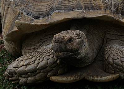 Photograph - The Tortoise by Ernie Echols