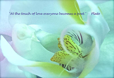 The Touch Of Love Art Print by Venetia Featherstone-Witty