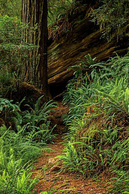 Photograph - The Trail In The Grove 2014 by Ralph Nordstrom