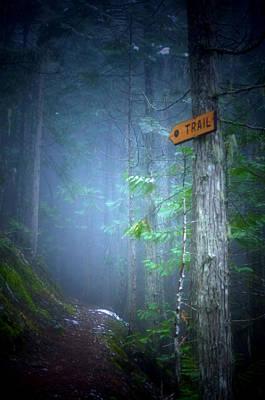 Photograph - The Trail by Tara Turner