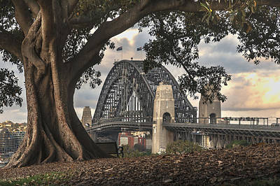 Sydney Skyline Photograph - The Tree And The Bridge by Emanuele Carlisi