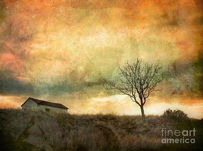 Photograph - The Tree And The Roof Top by Tara Turner