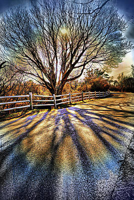 Red Photograph - The Tree And The Shadow 2 by Lilia D