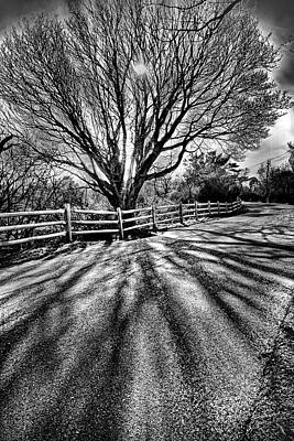 Photograph - The Tree And The Shadow Bw by Lilia D