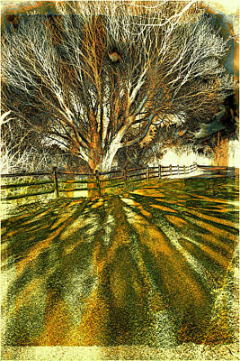 Photograph - The Tree And The Shadow by Lilia D