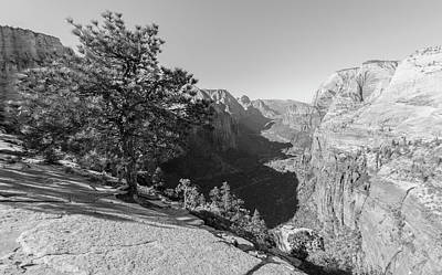 Photograph - The Tree At Angels Landing  by John McGraw